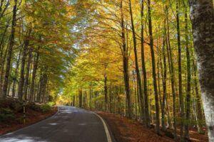 Foresta di faggi Monte Amiata, Toscana